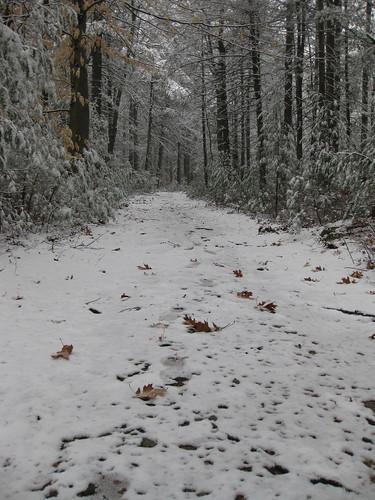 Footprints through a late-season snow on Jerimoth Hill.