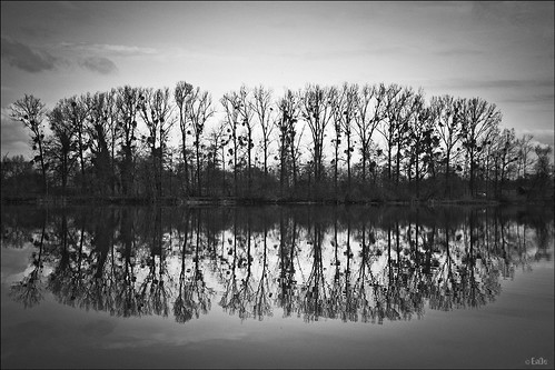 trees bw reflection water see wasser sw bäume spiegelung misteln mirrorser ennodernov mygearandme mygearandmepremium mygearandmebronze