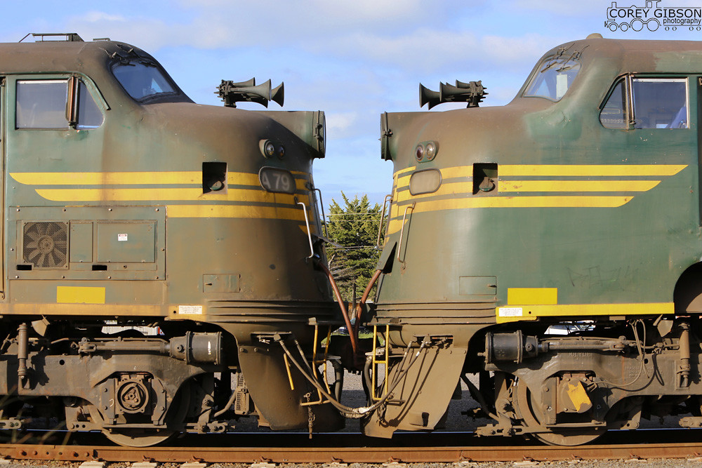 Australian Bulldogs A79 & A78 by Corey Gibson