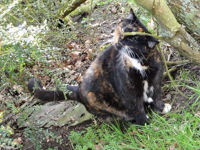 Cat on the farm 2