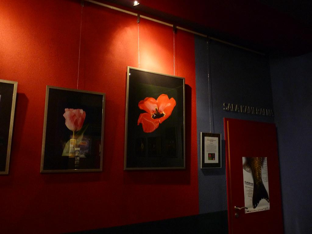 Wystawa fotografii Pawła Pietrzaka Kwiat/Ogień