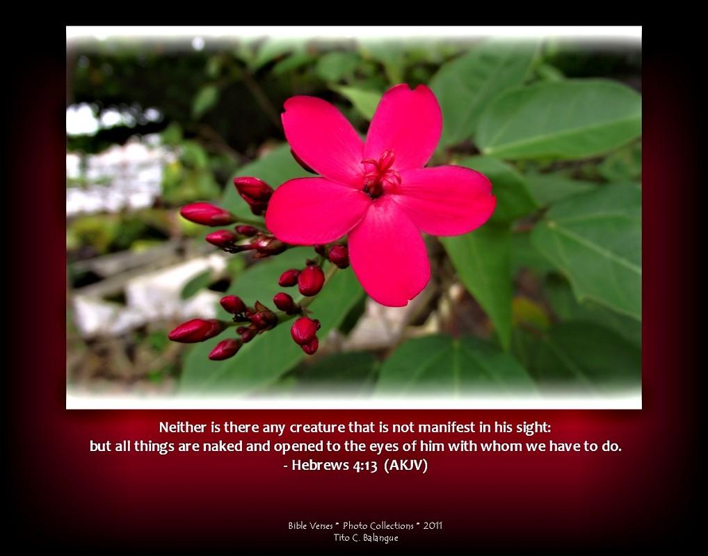 Hebrews 4:13 ( AKJV ) | ------------------------------------… | Flickr
