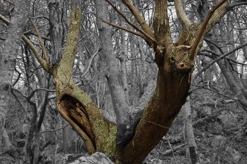 creatura del bosco