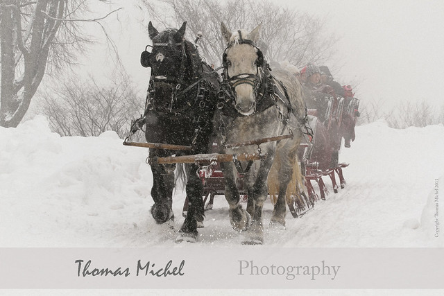 Sleigh Ride - Quebec Winter Carnival