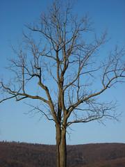 Sky Meadows State Park Tree