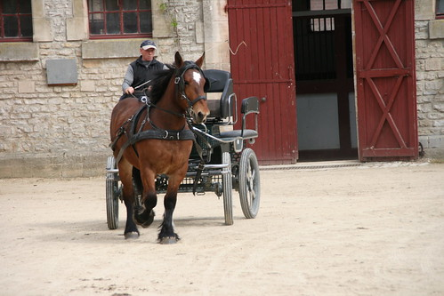 horses horse cheval driving carriage 400views 300views 300 each equine chevaux drafthorse ceffylau trait champagneardenne eich heavyhorse attelage capall over300views over400views trekpaard chevaldetrait equinephotography ardennais zugpferd capaill kezeg equinephotographer attelages montierender harasnational traitardennais harasnationaldemontier
