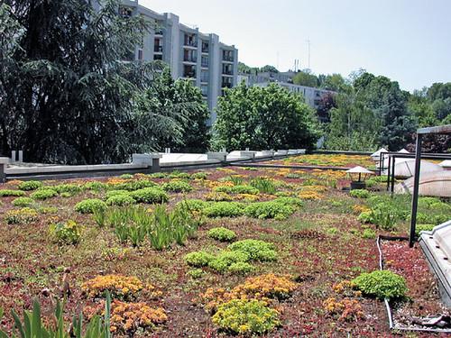 Toiture-terrasse végétalisée (TTV) | Siplast conçoit, fabriq… | Flickr