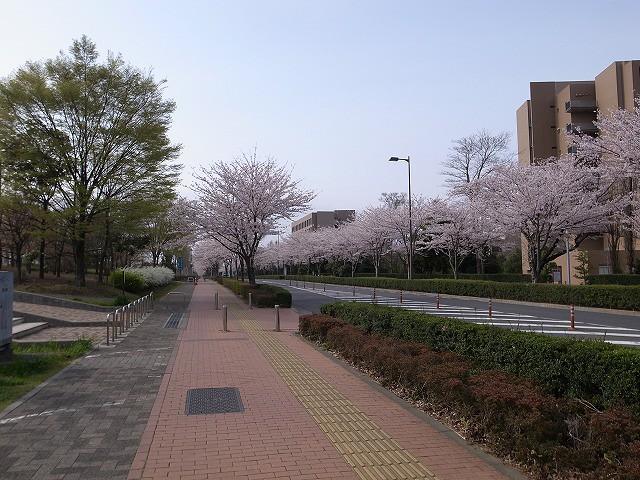 <p>i)桜並木</p>
