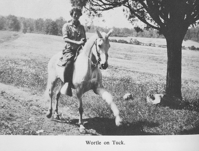 Wortle on tuck