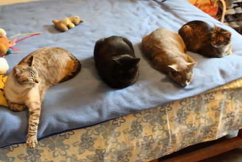 Gatos Desenfocados