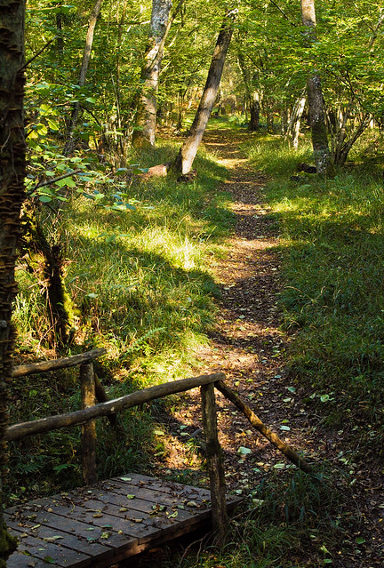 A footpath in Langley Wood National Nature Reserve, Wiltshire.
