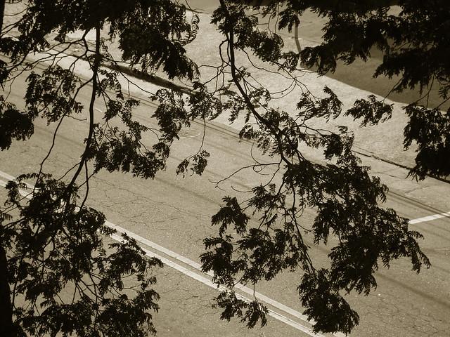 Renda no asfalto