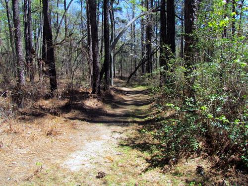 statepark nc paths caminhos sandhills weymouthwoods longleafpines