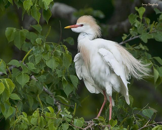 Ruffled Feathers...