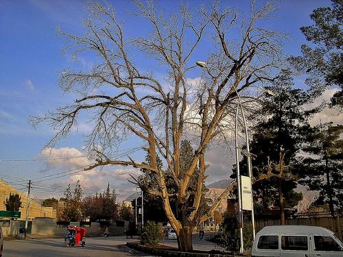 Winter in Quetta, Balochistan, Pakistan - February 2011 | by SaffyH