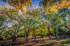 Mt Macedon Autumn Colours-30