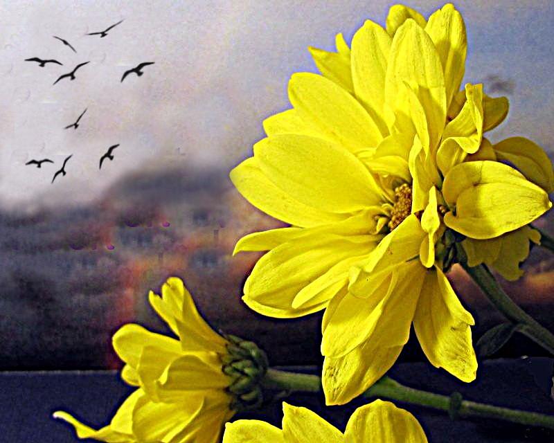 Fiori Gialli Yellow Flowers.Fiori Gialli Yellow Flowers Un Buon Fine Settimana A Tut Flickr