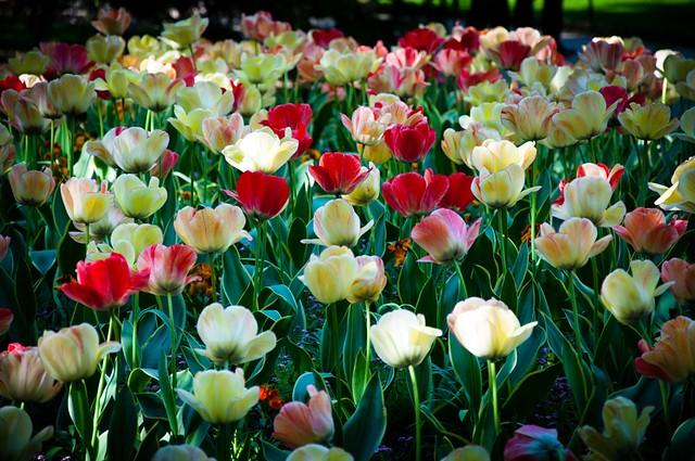 Flores del Jardín de Luxemburgo