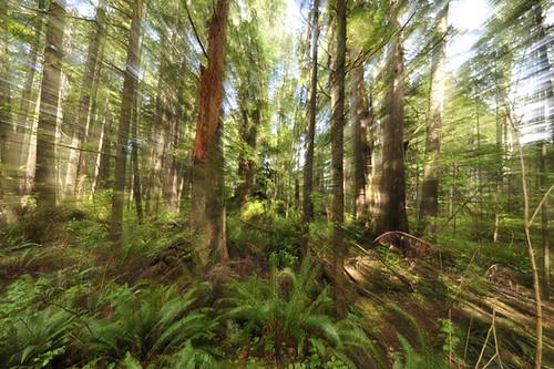Rainforest Zoom1
