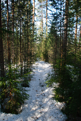 finland spring весна лес kevät снег hollola финляндия растения