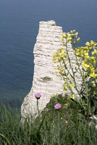 Pointe et fleurs