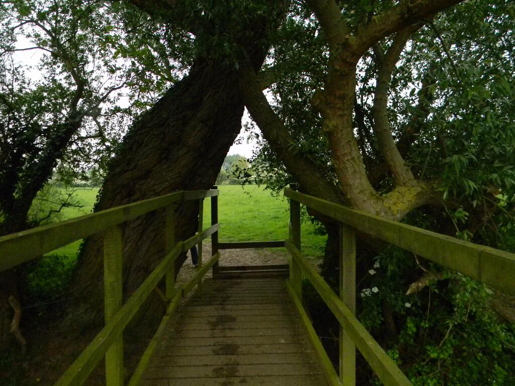 Bridge and trees Huntingdon Circular