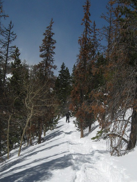 Trail to Nymph Lake