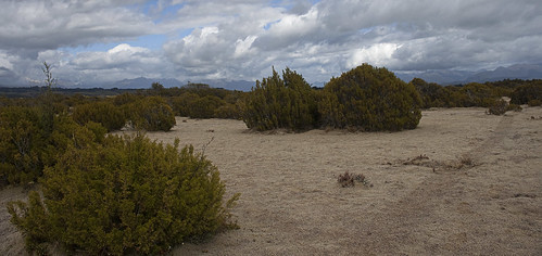 The Wilderness Area Scientific Reserve | by Nuytsia@Tas