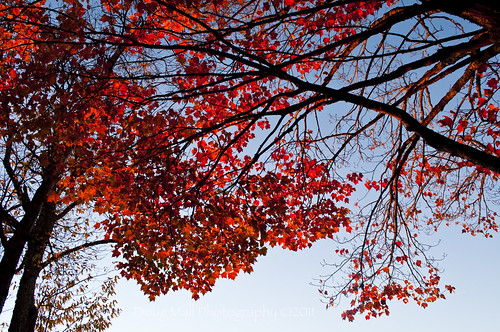 morning red cold fall nature leaves sunrise nc northcarolina autumnleaves blueridgeparkway 2010 evacassidy nikond5000 dougmallnikond5000 dougmall