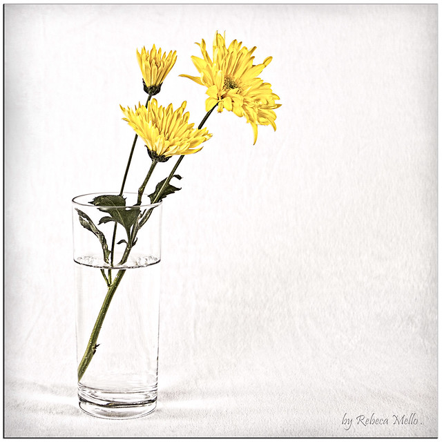 Simply a cup of water ..some flowers..