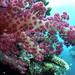 NOAA Ocean Explorer: Pacific Deep Reefs 2011 Exploration: Mission Summary