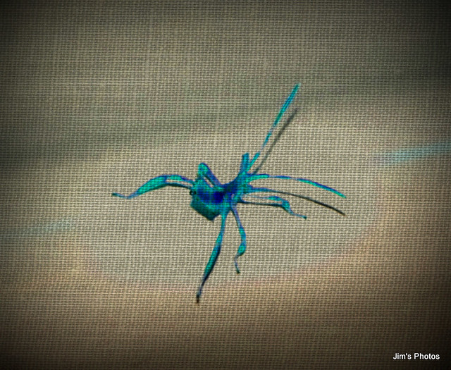 The Spider that got away.
