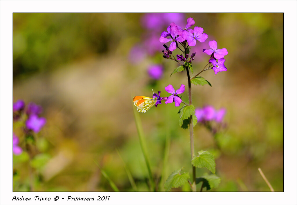 Fiori Di Primavera.Fiore Di Primavera Fiori Primaverili Foto Scattata Il 3