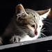 The Lost Kitten !!!
