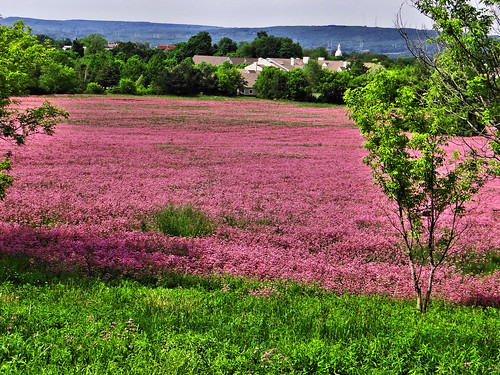 pink flowers wild sun spring blooms