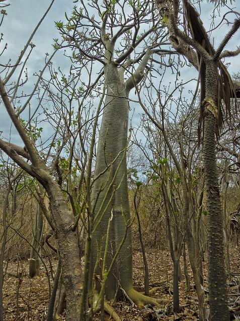 Madagascar8 - 071.jpg