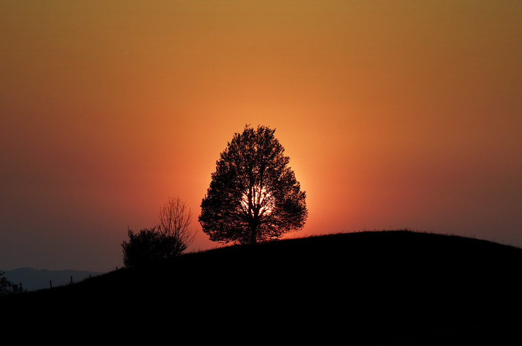 Easter Sunday Horizon Is Burning >> Burning Easter Tree Or Lame Attempt To Get Into Explore Eke