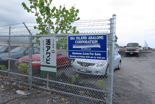 BIG ISLAND ABALONE CORPORATION | by okametaro2