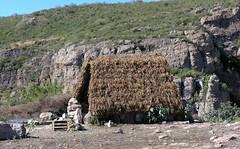 Grass roof hut - Casa típica Poblana (grupo indígena), entre Ameca y San Rafael de las Tablas, Zacatecas, Mexico