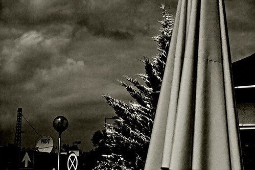 egyenesen, megállni tilos, fenyő-ernyő // straight, do not stop, pine-umbrella