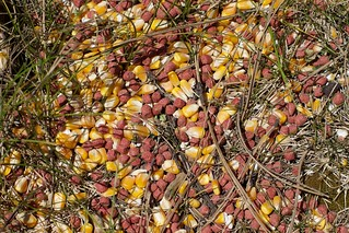 Corn/Kibble Circle   by cogdogblog