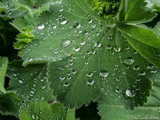 Waterdrops 09.05.2012 | by Silbersurfer