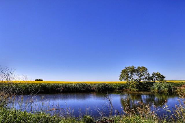 Prairie reflection