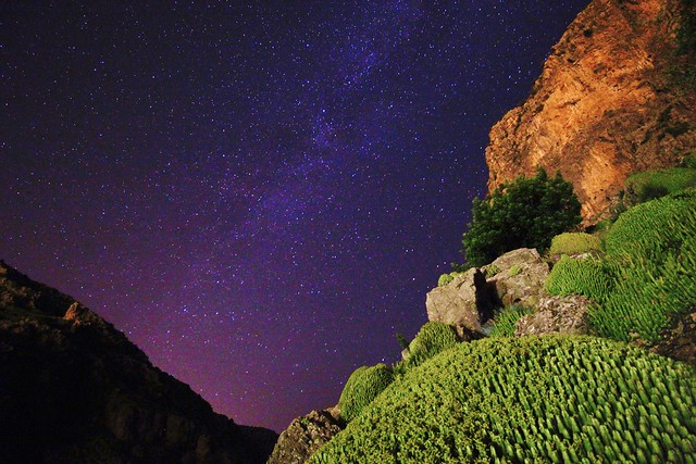 Milky Way, Cactus and Red Rock