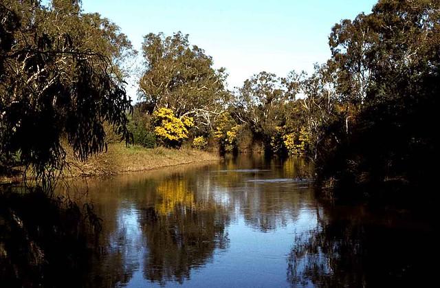 Mimosa - Yarra River - Victoria Australia