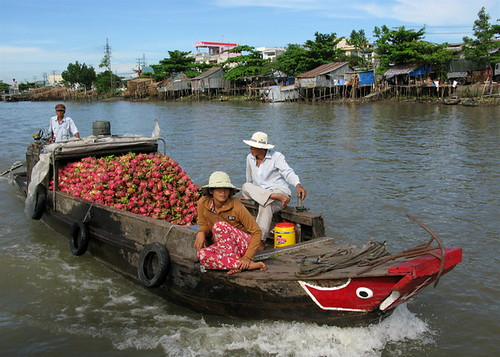 Dragon Fruit Boat, Can Tho, Vietnam | by adventurocity