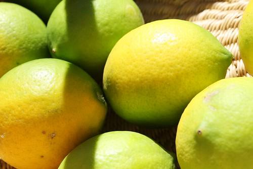 lemons | by penelope waits