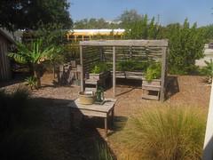 Tindall house fern garden