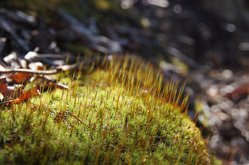Moss | by NatureServe