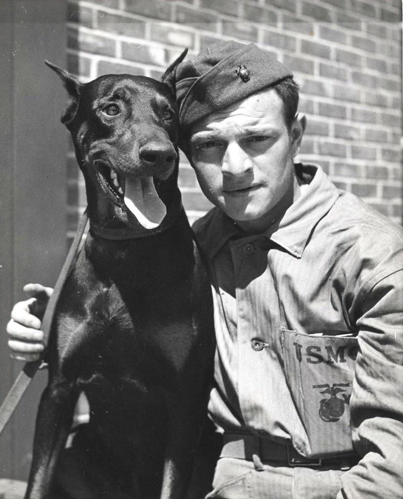 Private Alexander Boccardo and Doberman, ca  1943 | During W… | Flickr